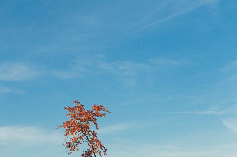 explore minnesota fall colors