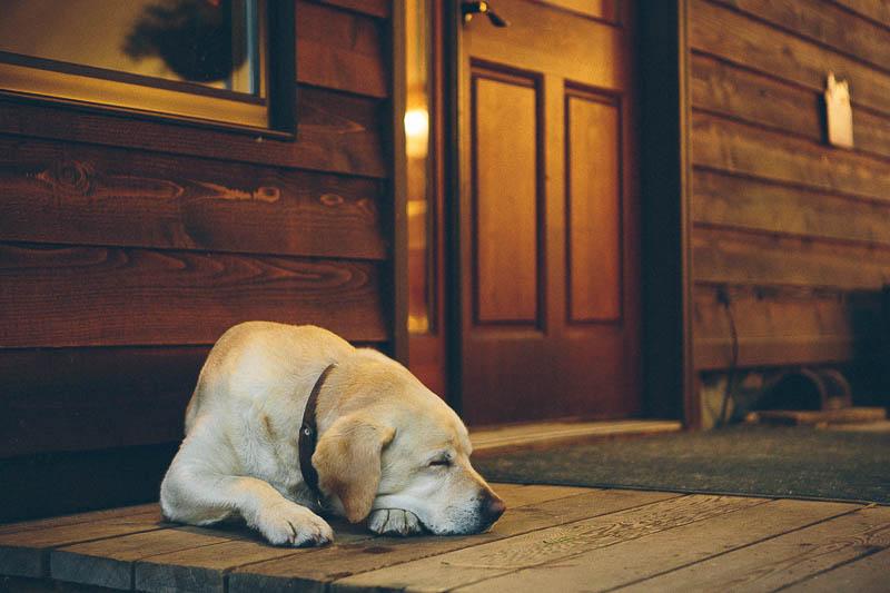 explore minnesota ludlows dog