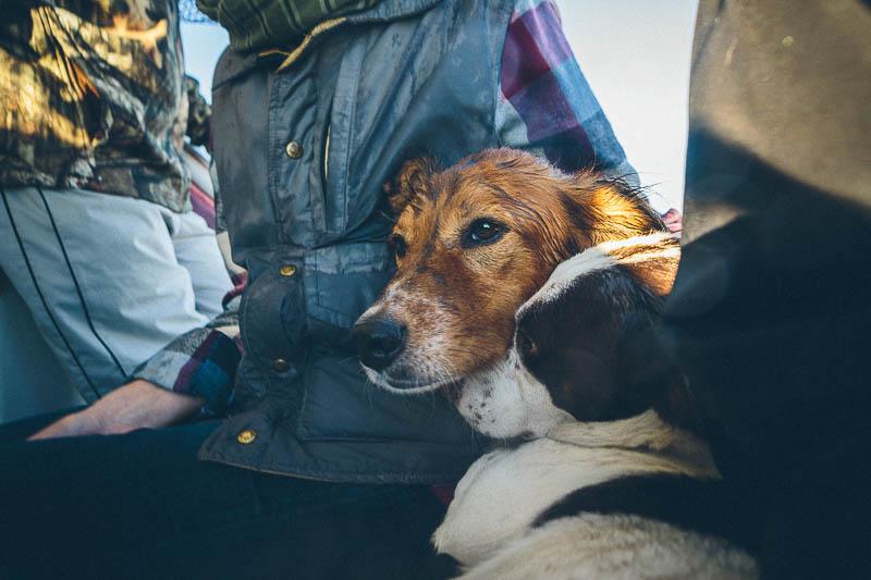 explore minnesota seasick dogs