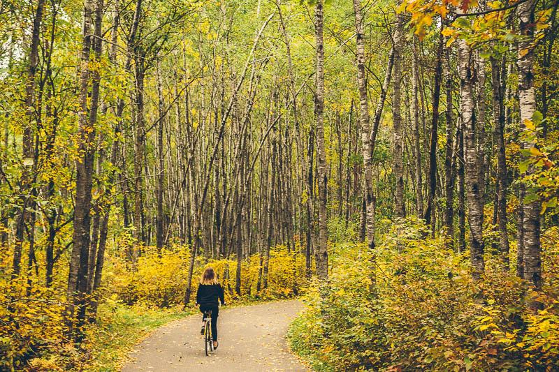 explore minnesota trees 3
